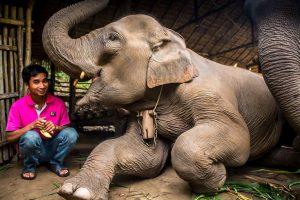 Chiang Mai al Santuario de Elefantes